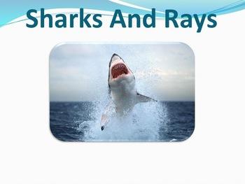 Sharks Rays - Marine Life Vol. 6 - Slideshow Powerpoint Presentation