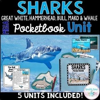 Sharks Research Mega Bundle (Hammerhead, Great White, Whale Shark & MORE!)