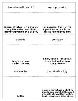 Sharks Vocabulary Bingo