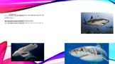 Sharks and Shark Debate