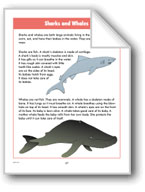 Sharks and Whales