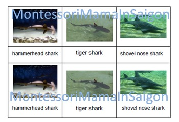 Sharks and Whales Montessori Three Part Cards