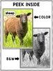 Close Reading Passage - Sheep Activities