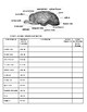 Sheep Brain Dissection Lab – Anatomy and Other Sciences