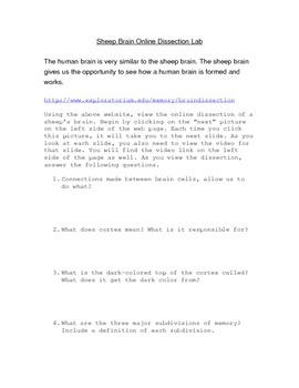 Sheep Brain Online Dissection worksheet