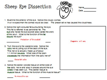 Sheep Eye Dissection - an in-class or on-line activity