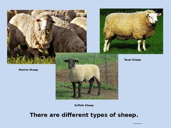 Sheep Facts Power Point