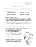 Sheep Heart Dissection - Lab Procedure and Worksheet - Editable