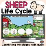 Sheep Life Cycle   Spring Mammal   Digital Boom Cards