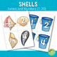 Shells Letters and Number Cards