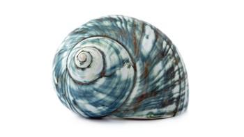 Shells Photo Bank / Image Library for Art Teachers