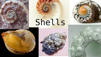 Shells Photo Bank / Image Library for Art Teachers