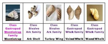 Shells Rummy