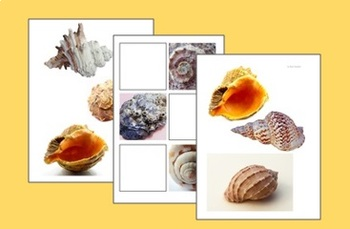 Shells Worksheets