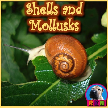 Shells and Mollusks - PowerPoint & Activities