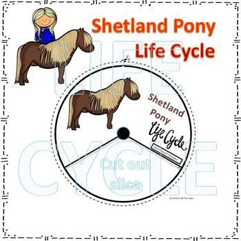 Shetland Pony (Life Cycle Spinner)