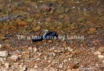 Shoe in the Water Stock Photo #210