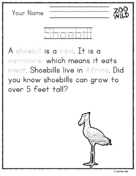 Shoebill Stork -- 10 Resources -- Coloring Pages, Reading & Activities