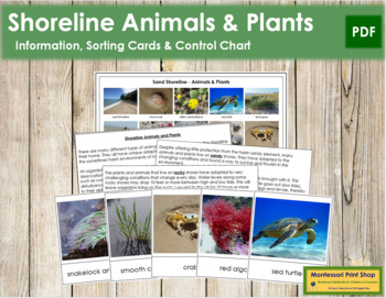 Shoreline Animals and Plants: Cards & Chart