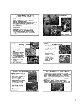 Shoreline Communities Powerpoint Slides 6 per page