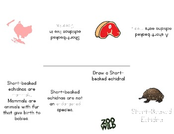 Short-Beaked Echidna -- 10 Resources -- Coloring Pages, Reading & Activities