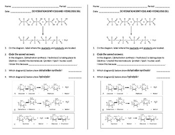 Short Dehydration Synthesis and Hydrolysis Warmup/Quiz