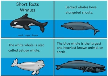 Short facts: Whales