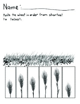 Shortest to Tallest Wheat: Sequencing by Size
