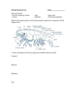Shrimp Dissection Lab