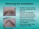 Shrimp Dissection PowerPoint Presentation
