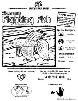 Siamese Fighting Fish -- 10 Resources -- Coloring Pages, Reading & Activities