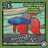 Siamese Fighting Fish (Betta) - 15 Resources - Reading, Sl