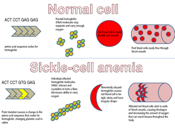 Sickle cell diagram