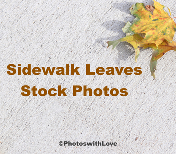 Sidewalk Leaves Stock Photos