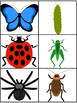 Sight Word Bugs Literacy Center