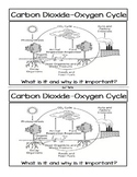 Significance of the Carbon Dioxide‐Oxygen Cycle