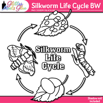 Silkworm Life Cycle Clip Art {Great for Animal Groups & Insect Resources} B&W
