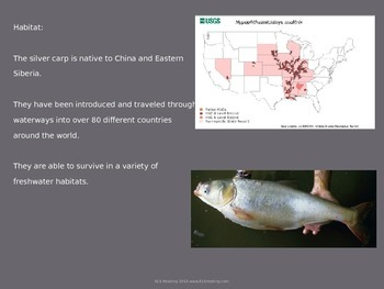 Silver Carp - Power Point - Invasive Species Facts History Information Pictures