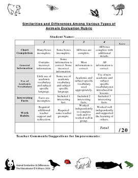 Similarities and Differences Among Animals Activity Free