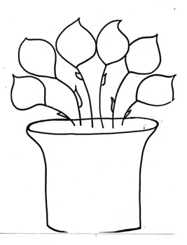 Similarities and Differences Plant