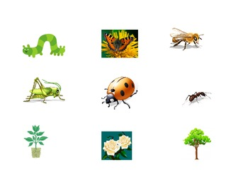 Simon Says Spanish Insect and Plants Identification Activity