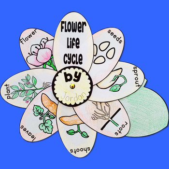 Simple Flower Life Cycle Activity
