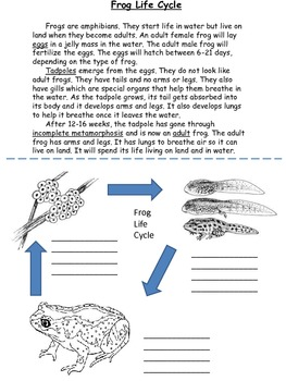 Simple Frog Life Cycle