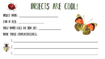 Simple Insect Zoo Portfolio