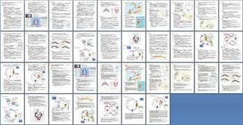 Simple Invertebrates Notes Outline Lesson Plan