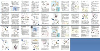 Simple Invertebrates Sponges Cnidarians Worms Unit Bundle - 9 Files