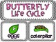 Life Cycle of a Butterfly: 4 stages