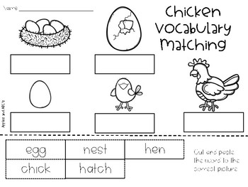 Life Cycle of a Chick Unit {4 stages}