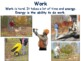 Simple Machines Lesson - study guide, state exam prep, 201