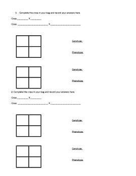 Simple Monohybrid Cross Worksheet